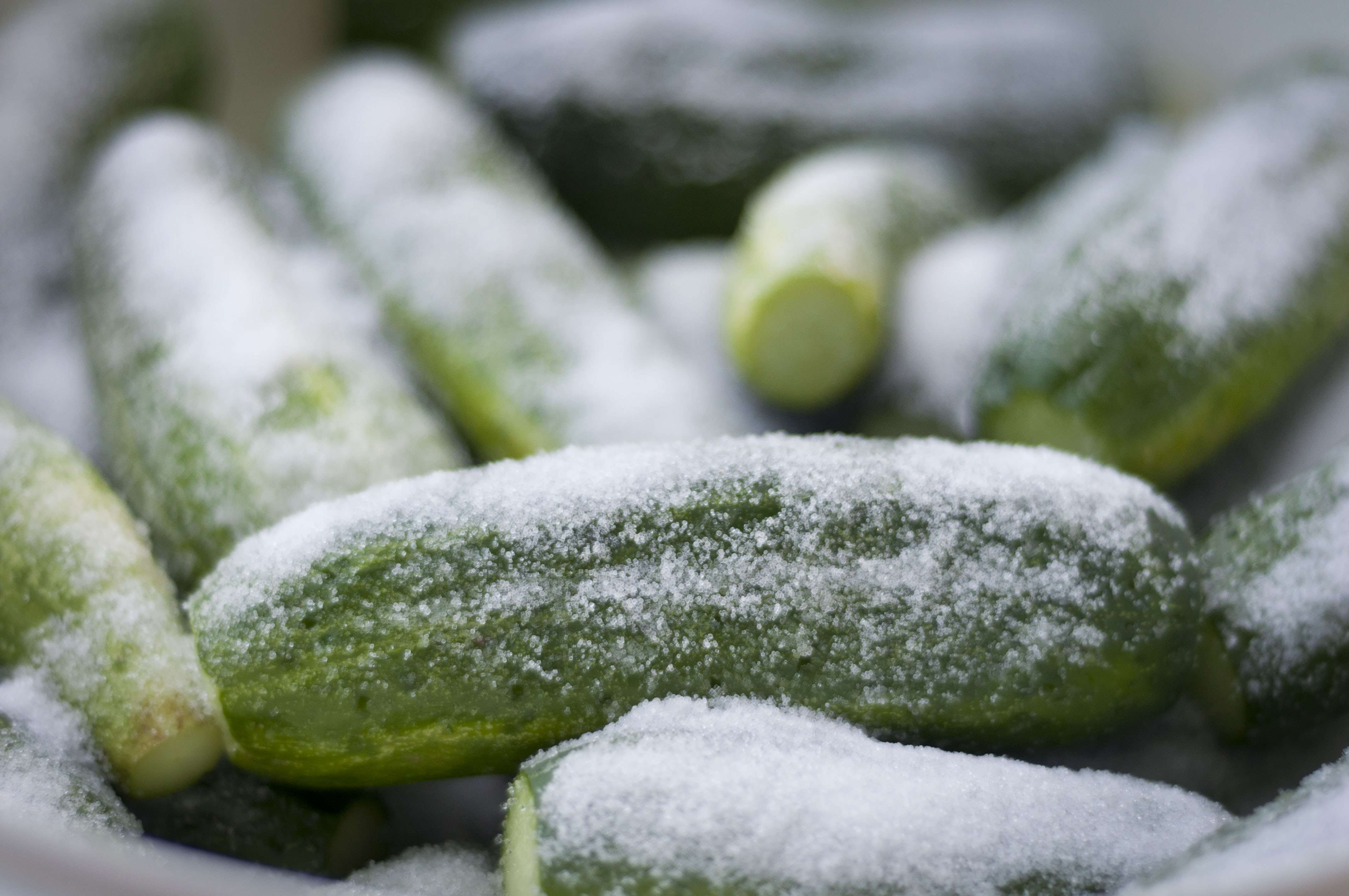 Making Pickles 101 (Recipe: Garlic-Dill Pickles) | Simple ...