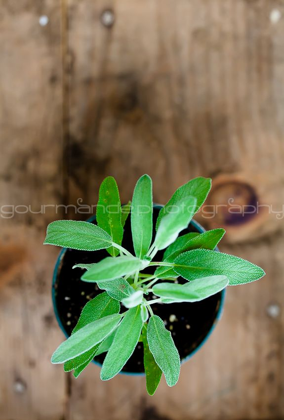 How To Grow Your Own Indoor Culinary Herb Garden Simple