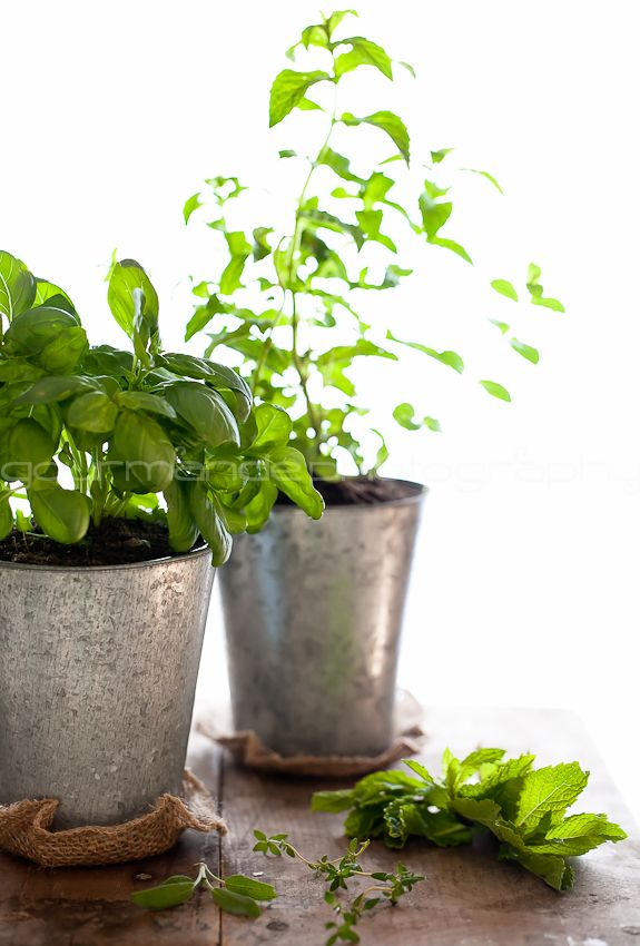 How to Grow Your Own Indoor Culinary Herb Garden Simple Bites
