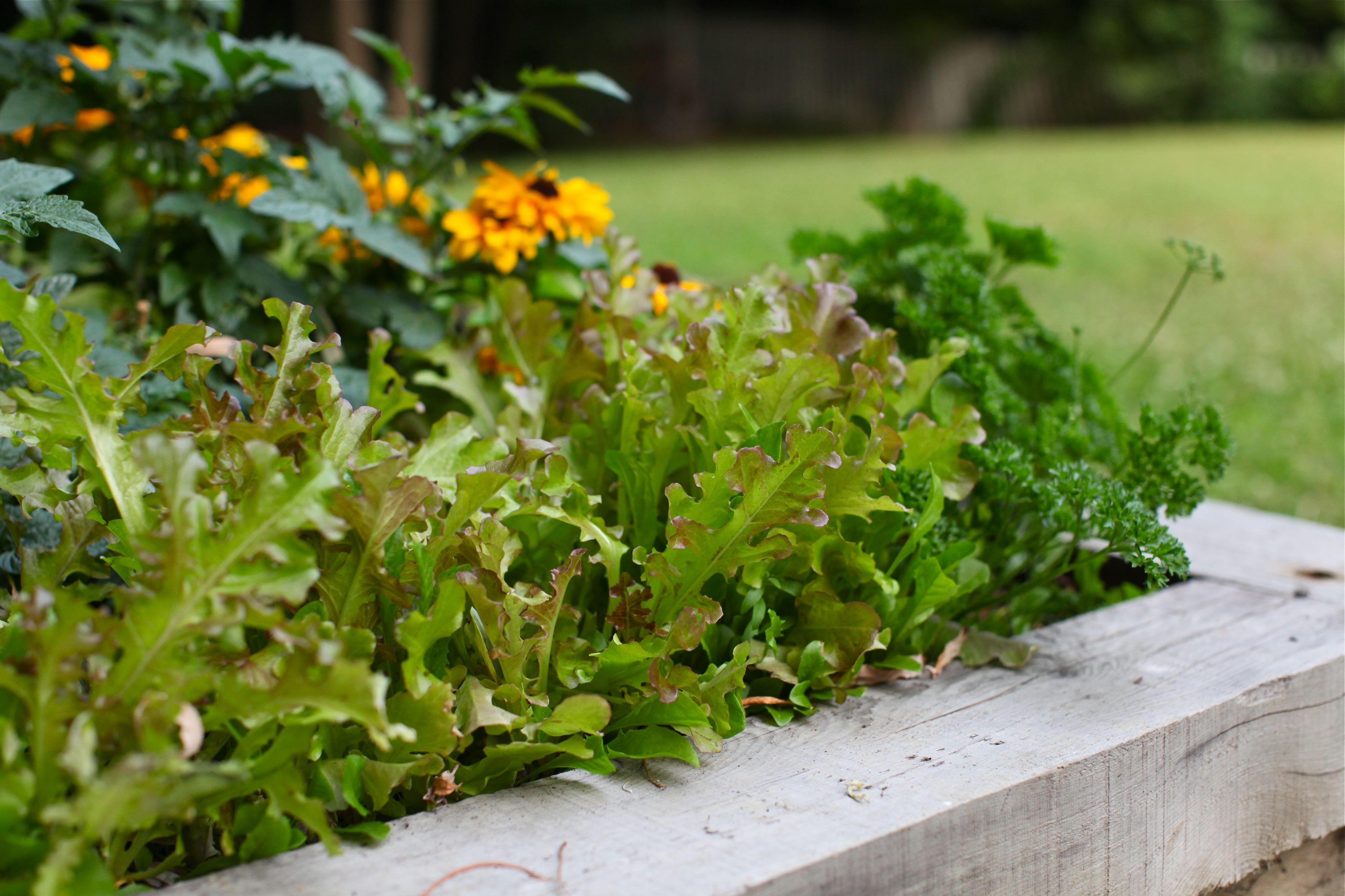 garden grow summer update from my backyard simple bites