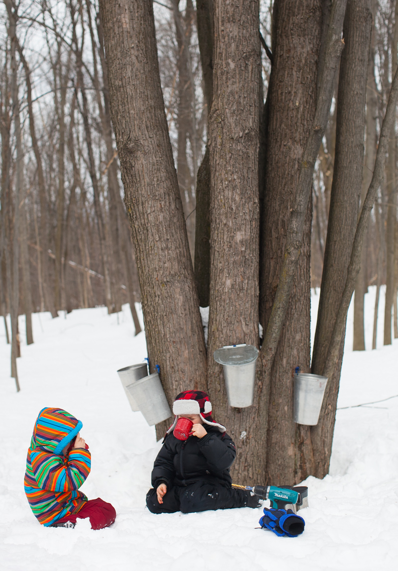 what we learned about making maple syrup simple bites