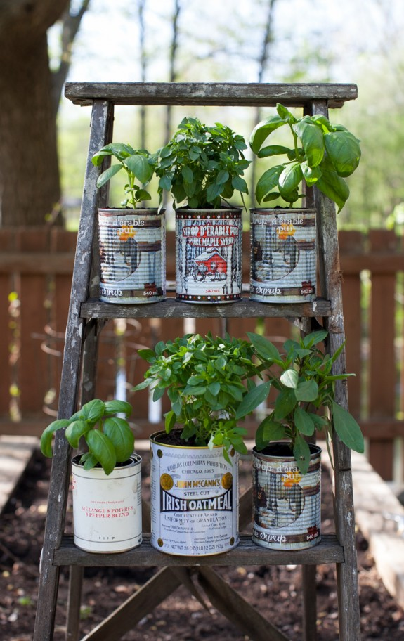 herbs in recycled tin cans and an old ladder display