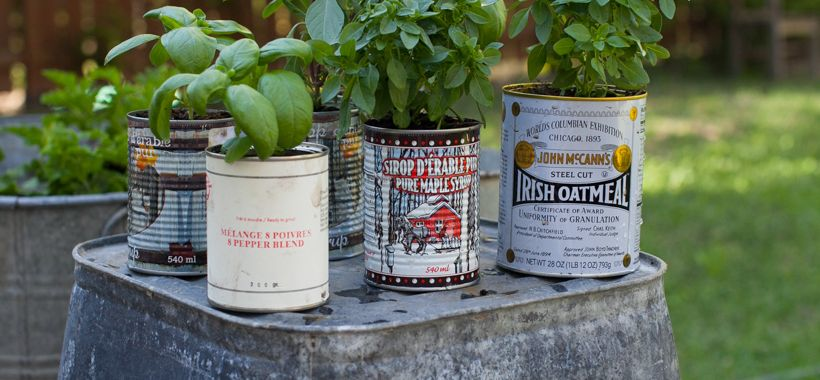 tin cans for herbs