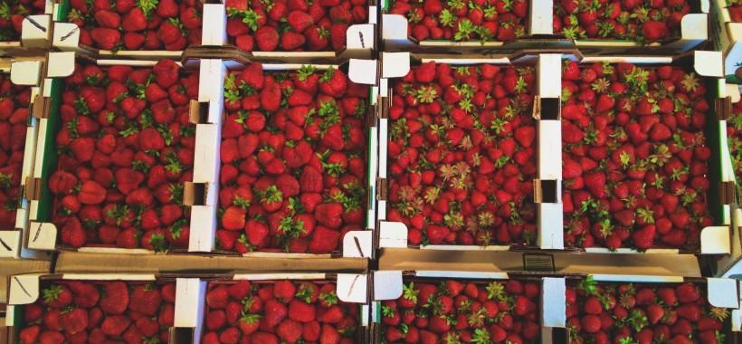 strawberryheader