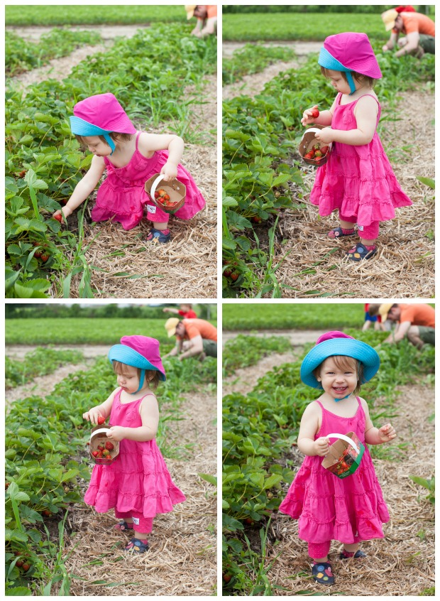 Clara strawberry picking