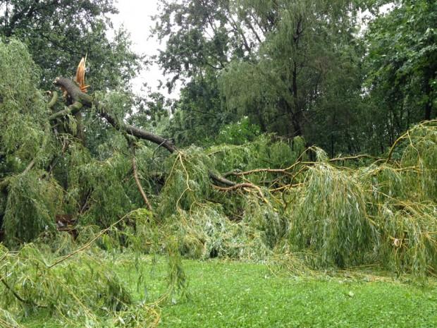 tree down-1