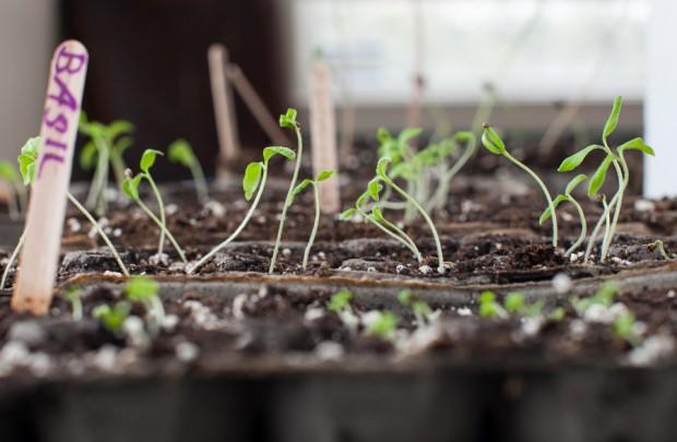 Starting seeds | Simple Bites