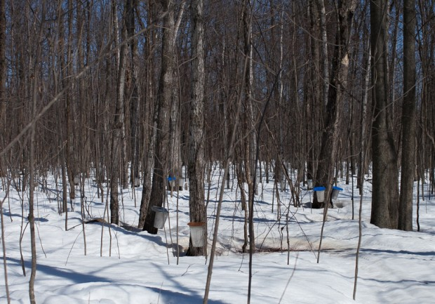 maple forest | sugaring off | Simple Bites