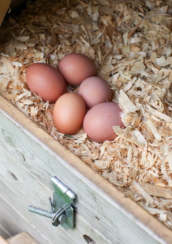 Farm fresh eggs from urban chickens   Simple Bites #urbanchcickens