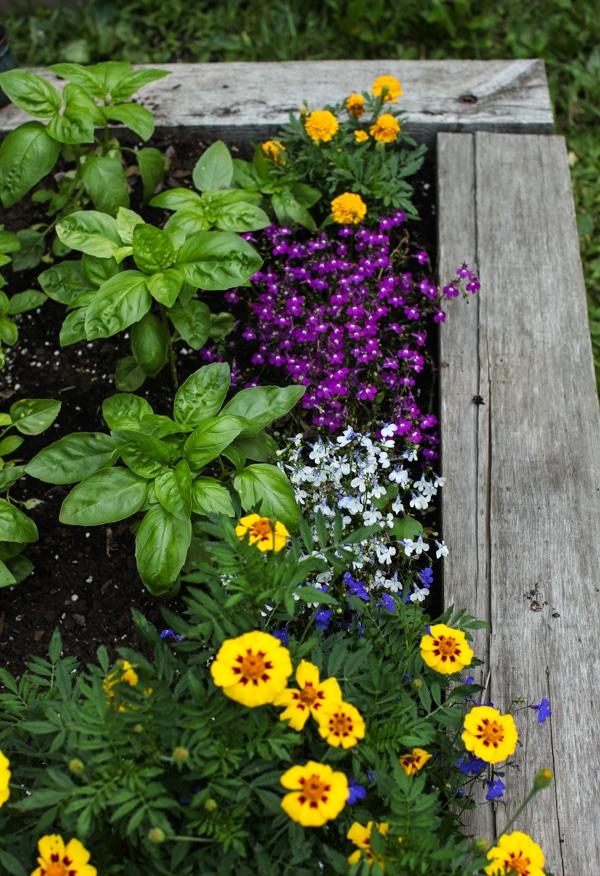 A Garden Tour | Simple Bites basil-1
