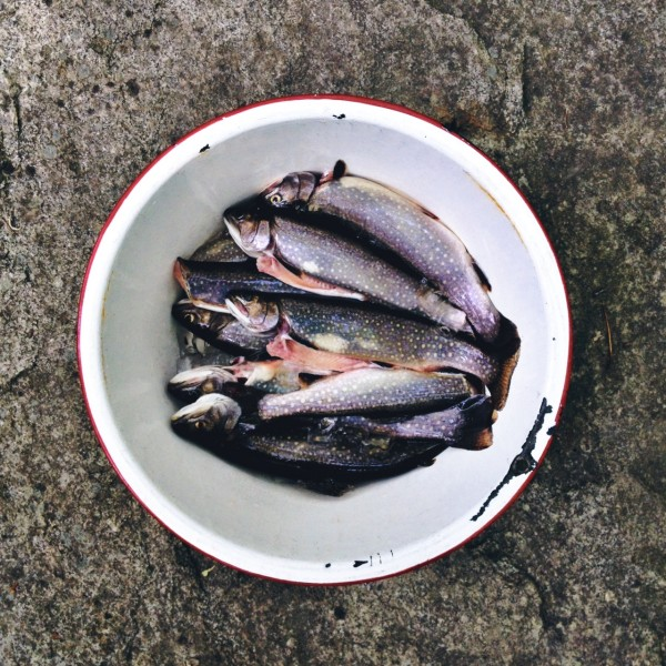 fresh caught trout