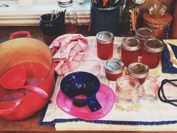 making rhubarb jelly.