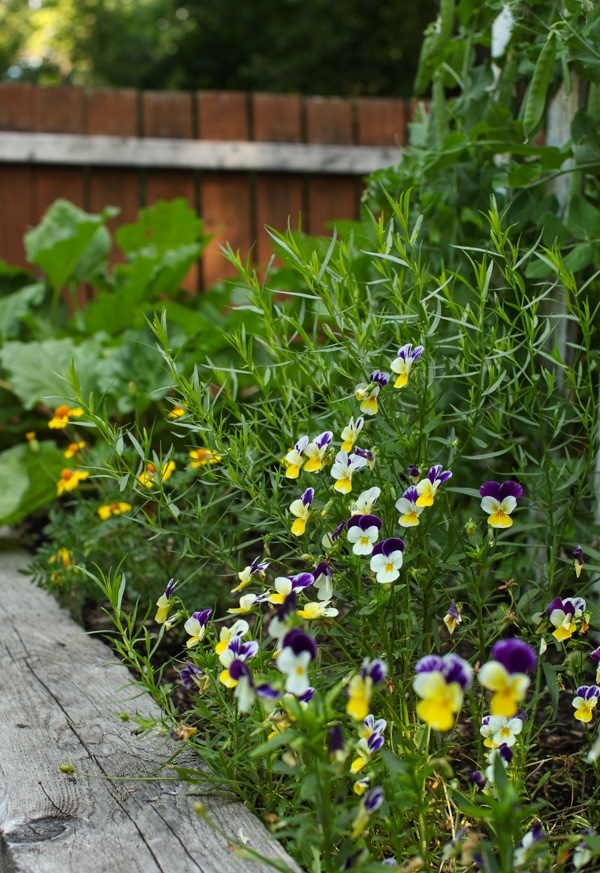 A Garden Tour   Simple Bites  pansies-1