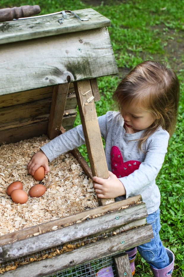 Simple Bites Urban Homestead Tour #homestead #garden #backyardchickens #DIY