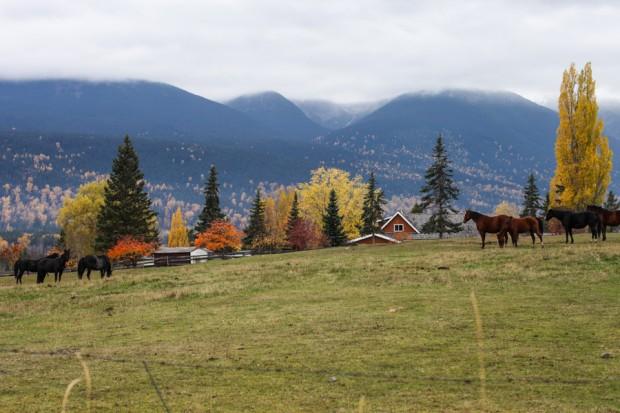 A British Columbia urban homestead   Simple Bites