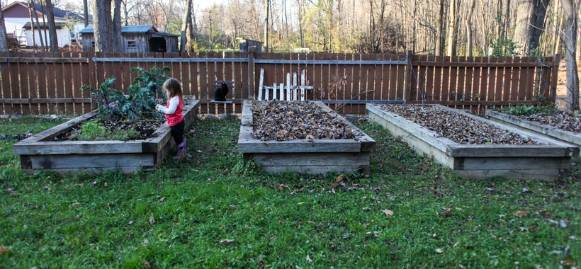 Why I mulch my garden in the fall.