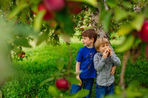 Boys in orchard from Brown Eggs & Jam Jars cookbook