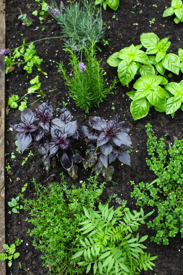 Tour the Simple Bites backyard garden in spring: herbs