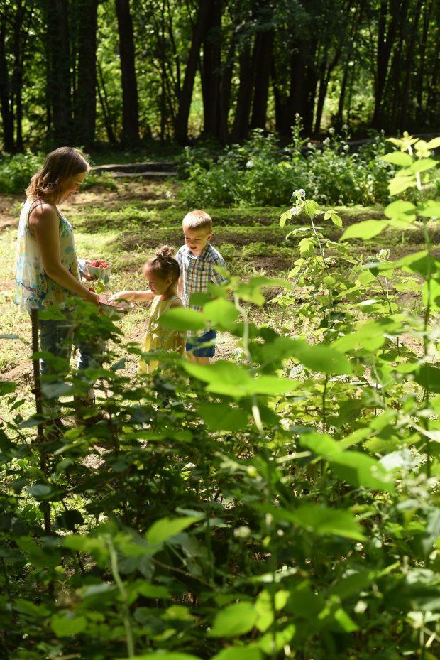 Aimee Clara Mateo picking rasperries