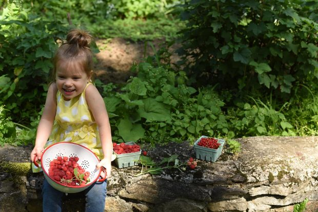 Clara with just picked raspberries