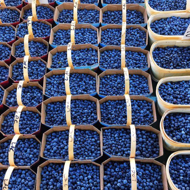 Quebec blueberries