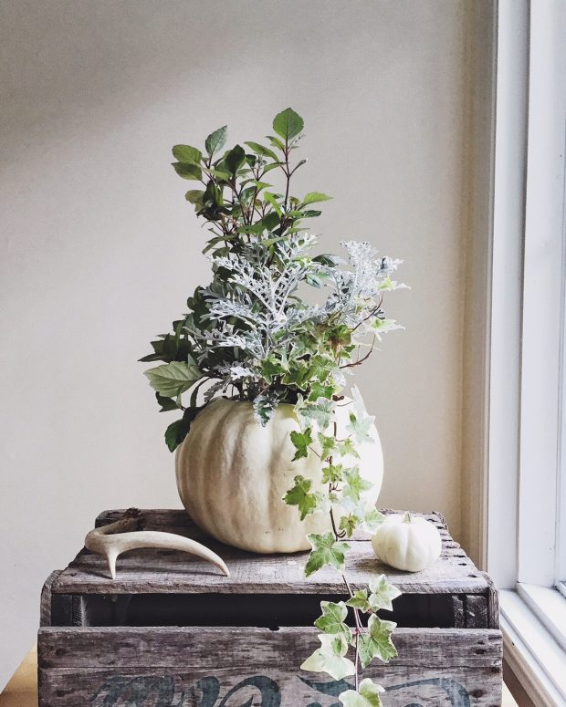 White pumpkin as a planter